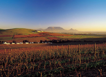 Durbanville Wine Region