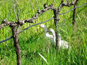 Going Green Cape Wine Tour