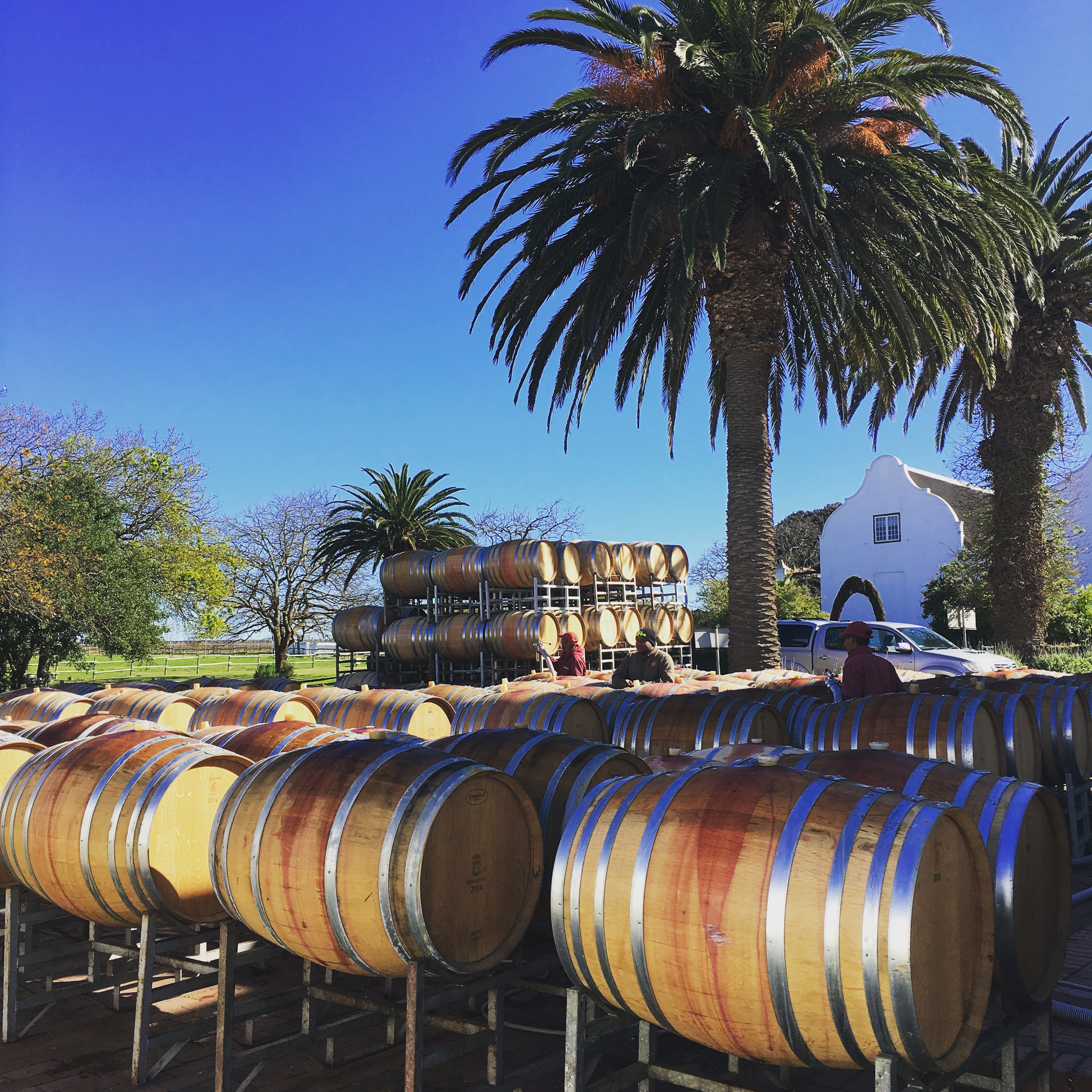 Meerlust Winery dates back to the late 1600's