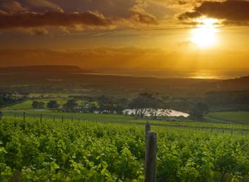 Peninsula Wine Region